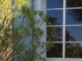 Le Palmier window view